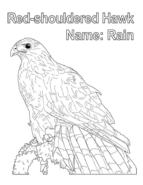 Fresno Wildlife Rehabilitation Service - Coloring Book